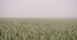 previsión de cereales para 2018/2019