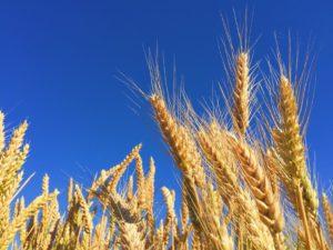 campaña de comercialización 2017 – 2018  cereales