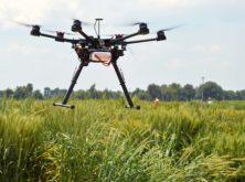 Investigan nuevas variedades de trigo resistentes a la sequía y adaptadas al cambio climático