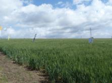 La cosecha de cereales en España podría caer más de un 25% con respecto a 2018