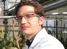 Alimentando nuestro futuro: el proyecto Wheat Cultivars mejora el rendimiento del trigo